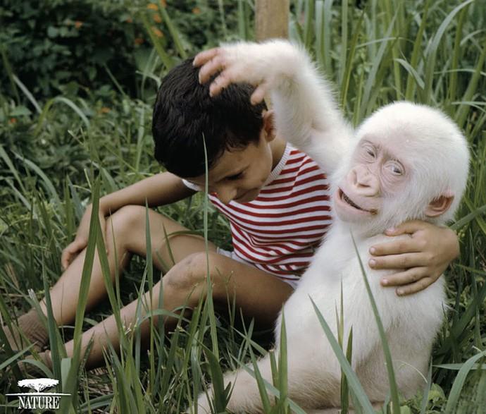 albin11