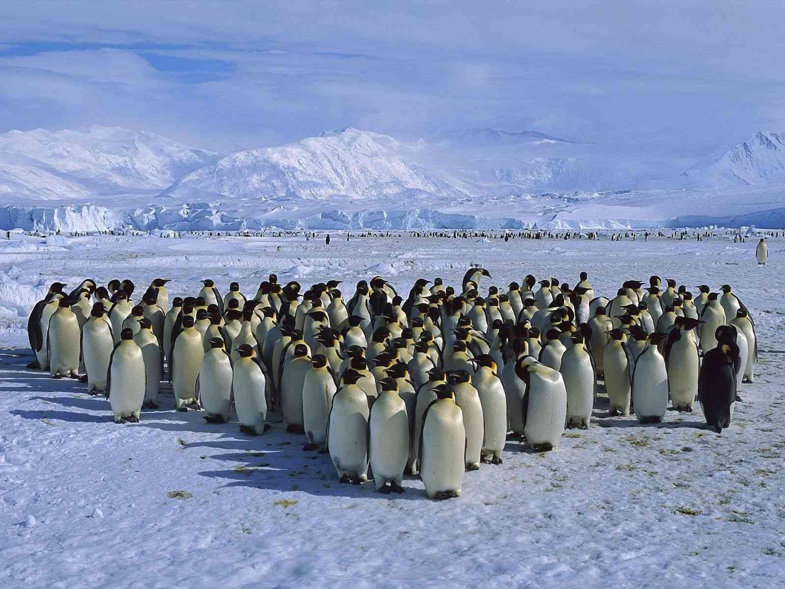 Kde žijú tučniaky?
