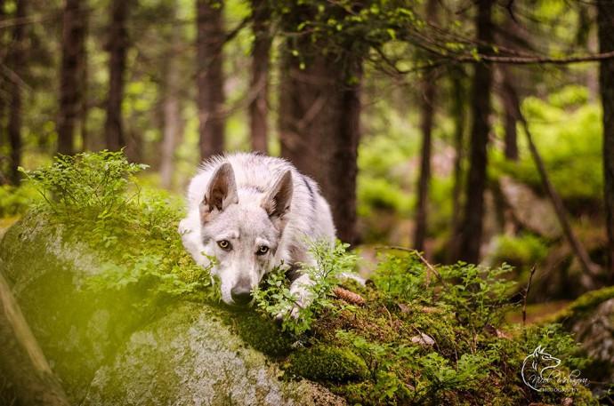 fotografie psov (3)