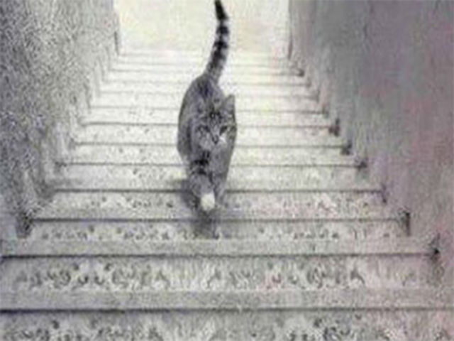 Ide mačka hore, či dole?