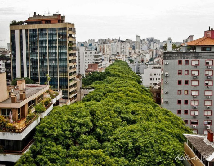 Each-side-of-the-street-is-lined-with-trees-some-as-tall-as-the-7th-floors-in-adjacent-buildings.