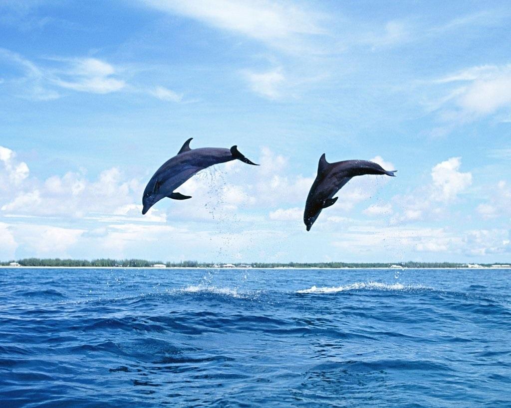 Je delfín ryba alebo cicavec?