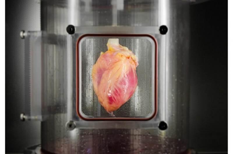 Srdce má veľkosť asi ako...