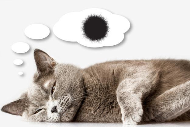 Aký je odborný termín nestrávených zvyškov srsti mačky?