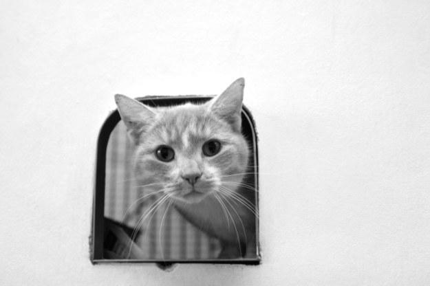 Čo slúži mačke na zistenie, či sa zmestí do rozličných úzkych priestorov?
