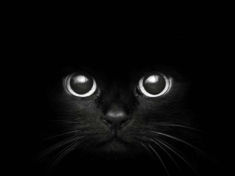 Mačky môžu vidieť v úplnej tme.
