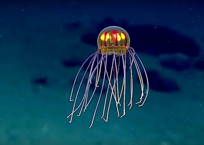 meduza2
