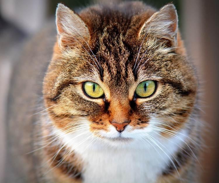 Koľko mačiek je v miestnosti ak v každom roho sedí mačka a každá mačka vidí tri mačky?