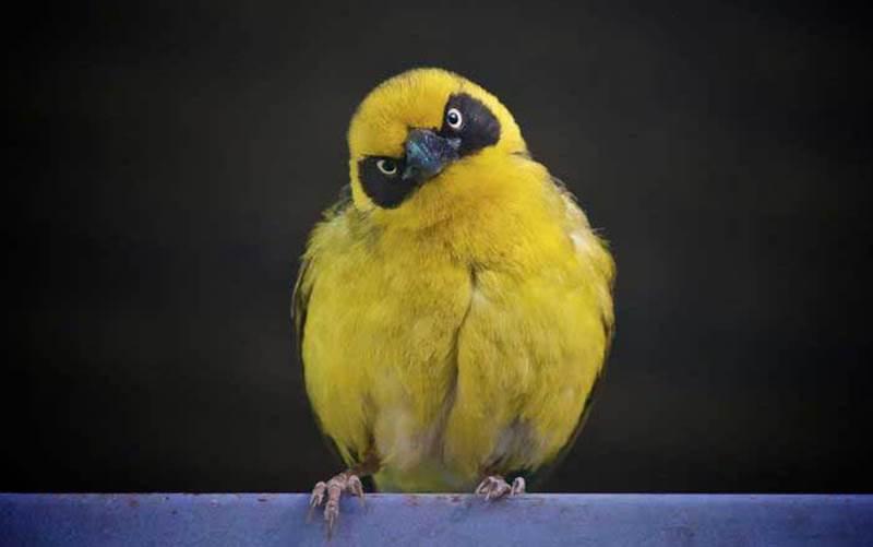 Existuje nejaký druh vtáka, ktorý nepotrebuje prijímať potravu?