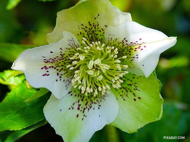 Táto rastlina sa volá: