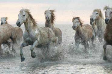 horsebreedspictures.com