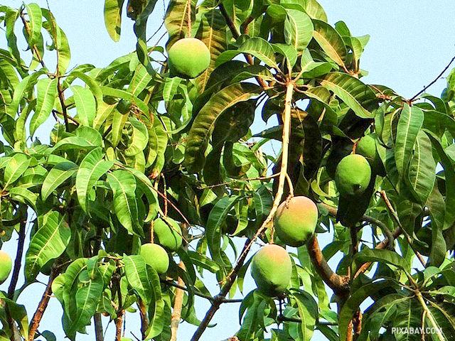 Aké ovocie vidíte na obrázku?