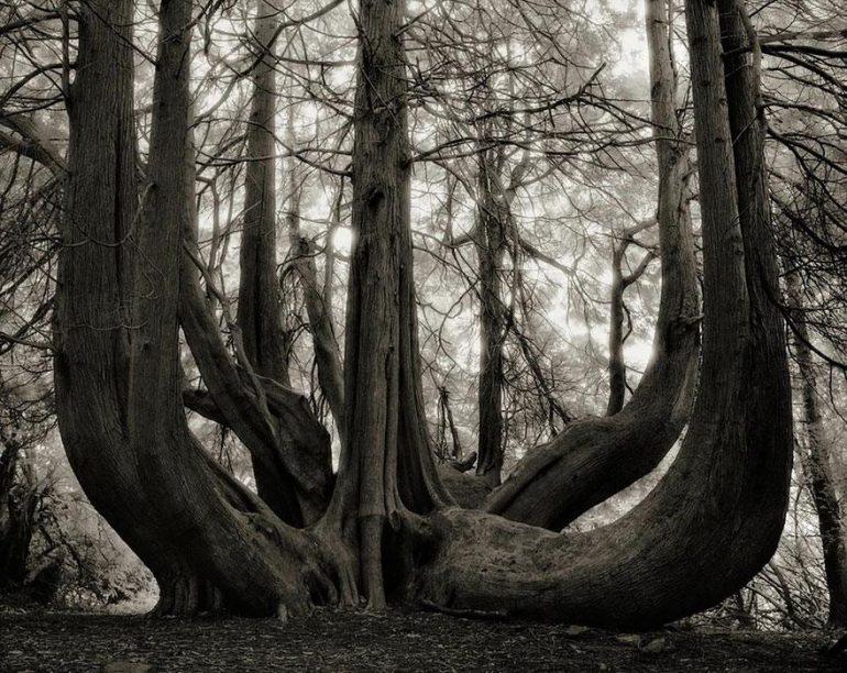 najstarsie-stromy14