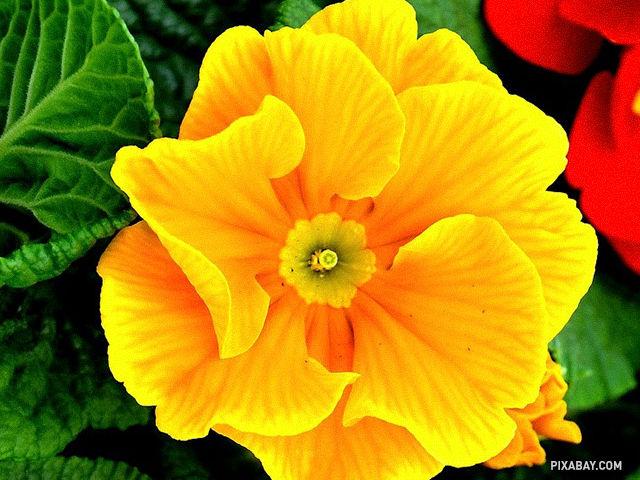 Ako sa volá rastlina na obrázku?