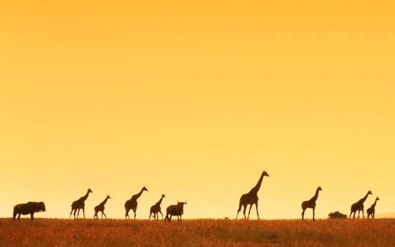 Ktorá africká krajina je najväčšia podľa rozlohy?