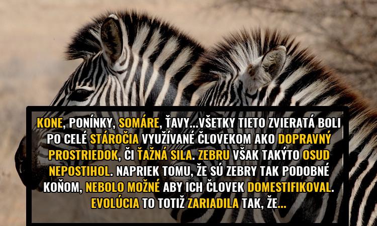 fakt-zebra-prez