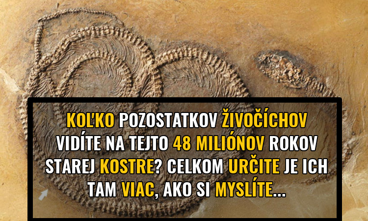 fosilie-prez