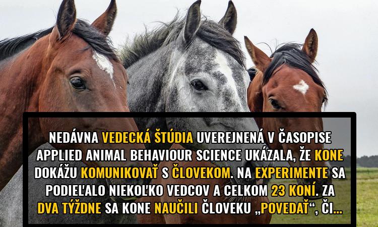 kone-komunikuju-s-clovekom-prez