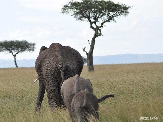 Ktorá krajina má v Afrike najväčšiu rozlohu?