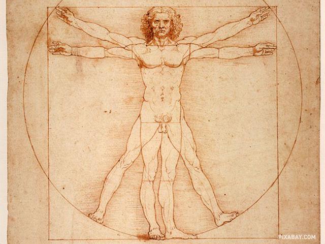 Ktorý orgán ľudského tela je najväčší?
