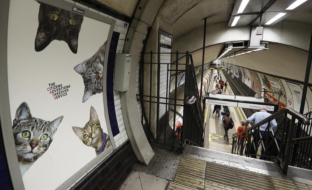 KK16 Londýn - Na snímke obrázok s maèkami na stanici metra Clapham Common v Londýne 13. septembra 2016. Za nápadom vymeni reklamy za obrázky s maèkami stojí obèianske združenie Citizens Advertising Takeover Service (CATS). Financie na prenájom všetkých reklamných plôch sa vyzbierali prostredníctvom crowdfundingovej služby Kickstarter. Na 23 000 britských libier (27 000 eur) sa zložilo takmer 700 ¾udí. FOTO TASR/AP A poster featuring cats, on display, at the Clapham Common Tube station in London, Tuesday, Sept. 13, 2016. Cat lovers in need of a pick-me-up may start gravitating toward London's Clapham Common Tube station. All of the station's customary advertisements have been taken down, replaced by 68 oversized portraits of rather adorable cats. (AP Photo/Frank Augstein)