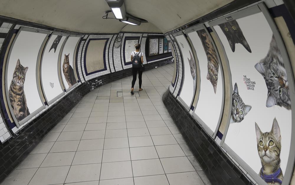 KK17 Londýn - Na snímke obrázky s maèkami na stanici metra Clapham Common v Londýne 13. septembra 2016. Za nápadom vymeni reklamy za obrázky s maèkami stojí obèianske združenie Citizens Advertising Takeover Service (CATS). Financie na prenájom všetkých reklamných plôch sa vyzbierali prostredníctvom crowdfundingovej služby Kickstarter. Na 23 000 britských libier (27 000 eur) sa zložilo takmer 700 ¾udí. FOTO TASR/AP A poster featuring cats, on display, at the Clapham Common Tube station in London, Tuesday, Sept. 13, 2016. Cat lovers in need of a pick-me-up may start gravitating toward London's Clapham Common Tube station. All of the station's customary advertisements have been taken down, replaced by 68 oversized portraits of rather adorable cats. (AP Photo/Frank Augstein)