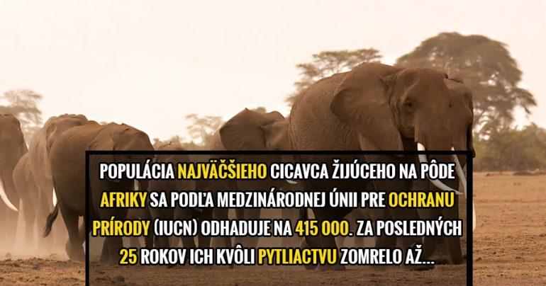 durbansafaris.com