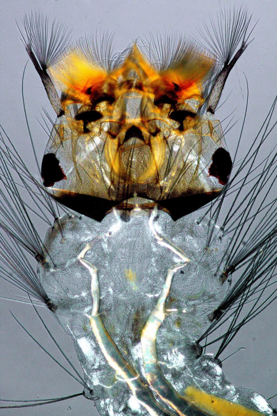 mikroskopicke-zabery-14