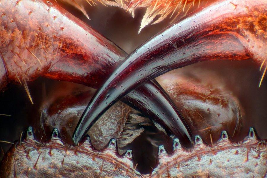 mikroskopicke-zabery-17