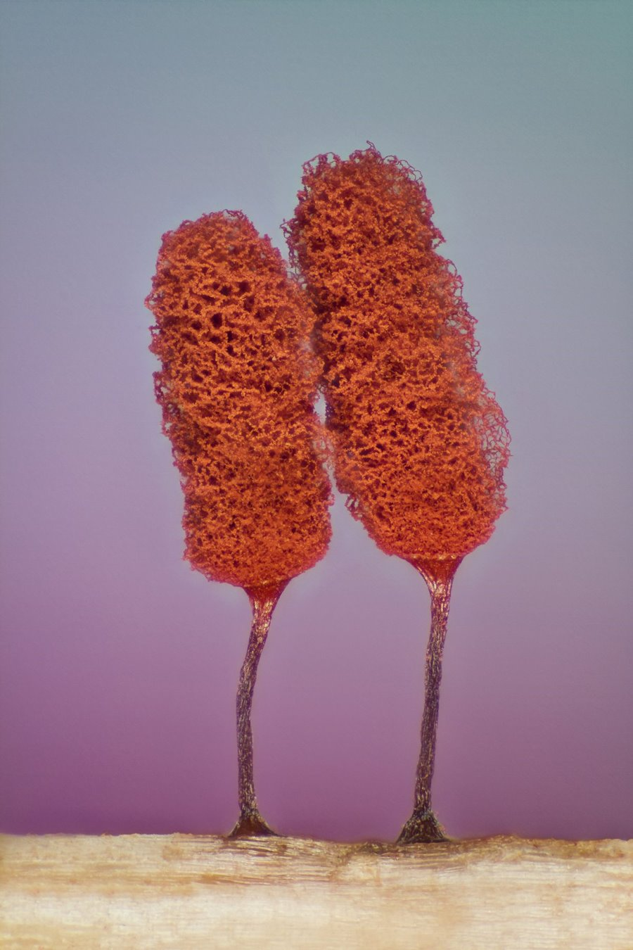 mikroskopicke-zabery-2