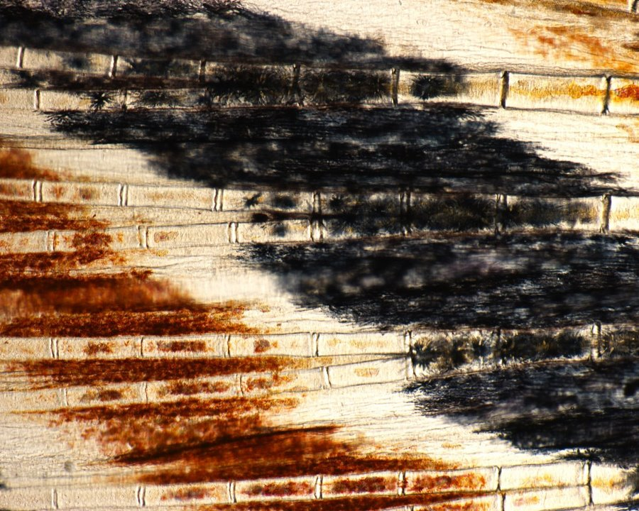 mikroskopicke-zabery-3