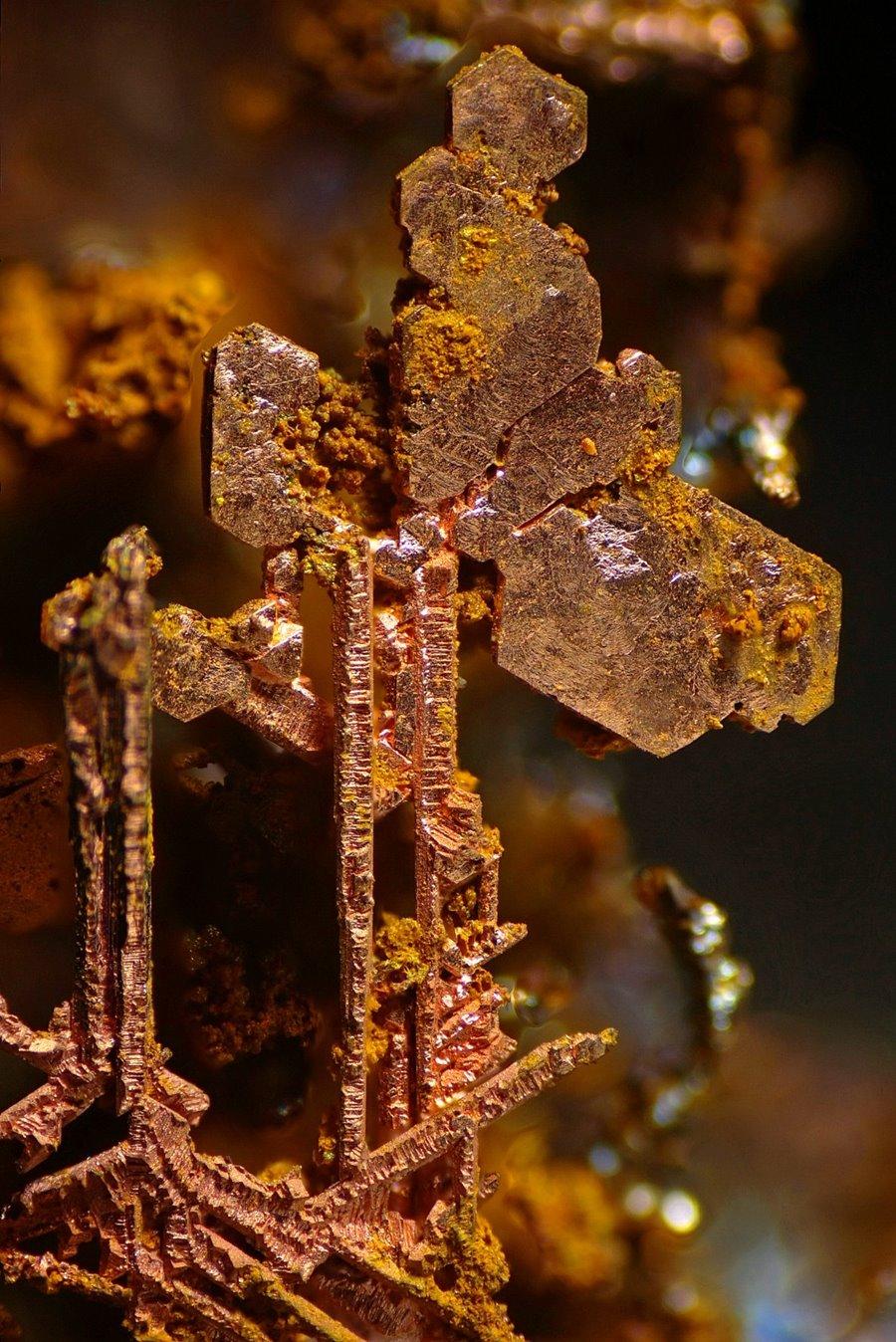 mikroskopicke-zabery-5