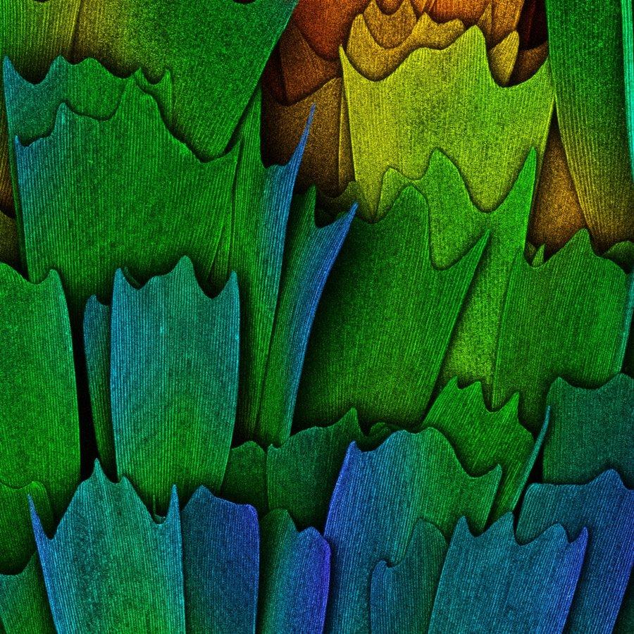 mikroskopicke-zabery-8