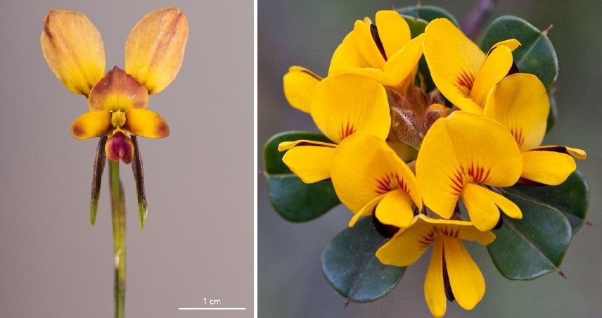 orchidea08
