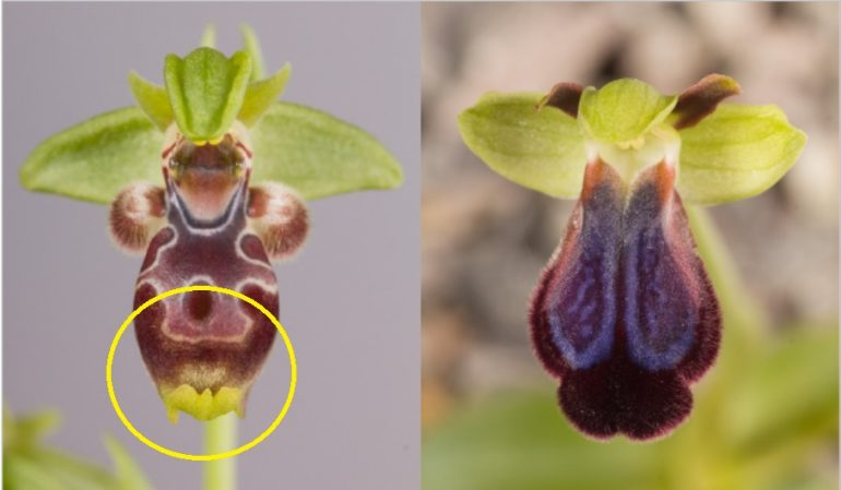 orchidea09-title