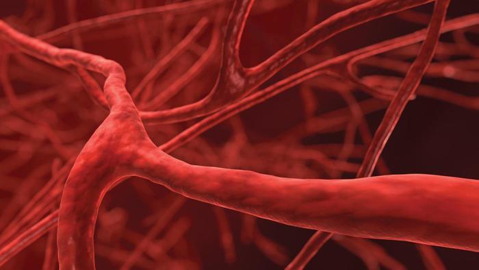 krve-tepny