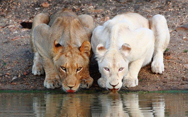 Ktoré zviera vydrží najdlhšie bez jedla?