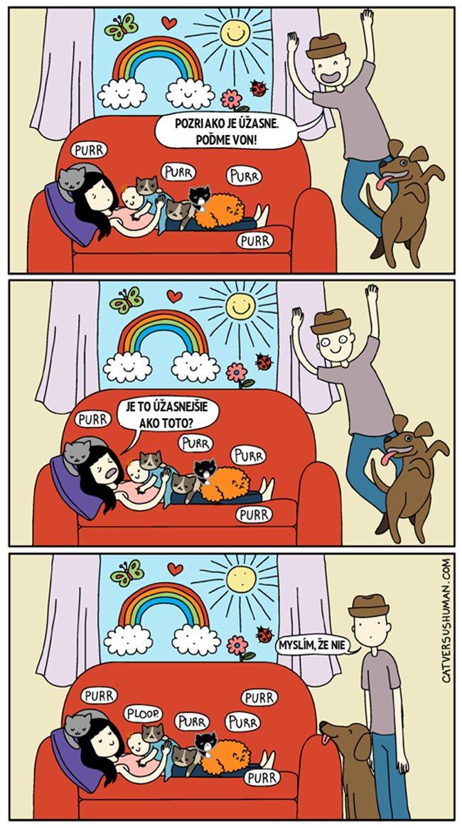 catversushuman