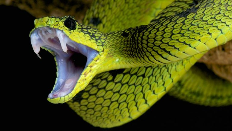 http://kids.nationalgeographic.com/explore/nature/super-snakes/