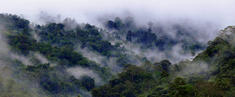 najvyssi-tropicky-strom-3