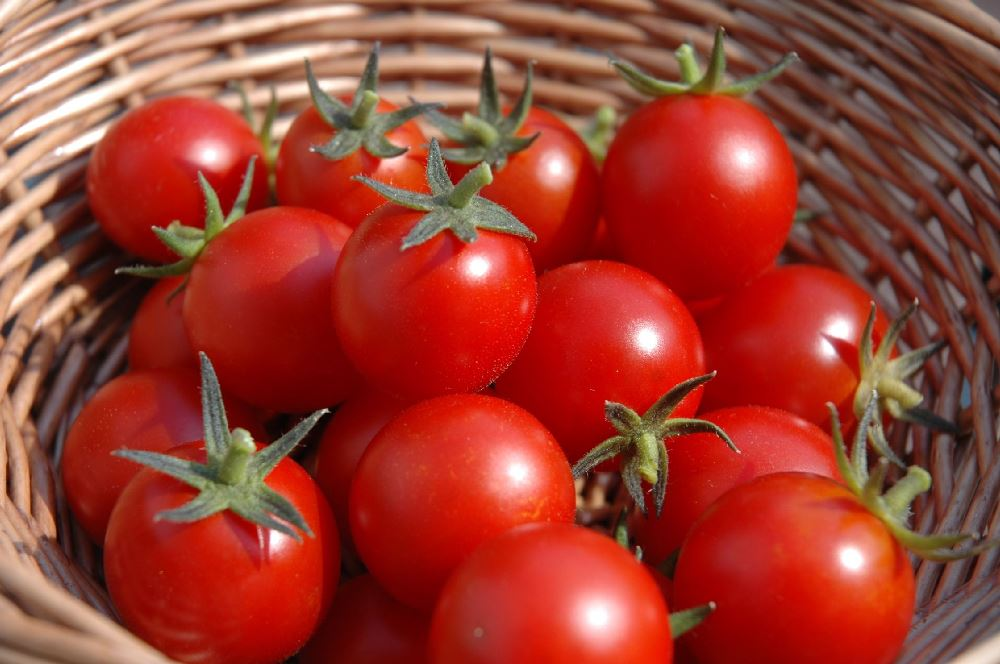 http://www.tomatodirt.com/growing-cherry-tomatoes.html