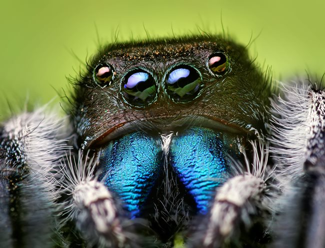 Patria pavúky medzi hmyz?