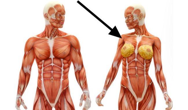 Ako sa volá tento sval?