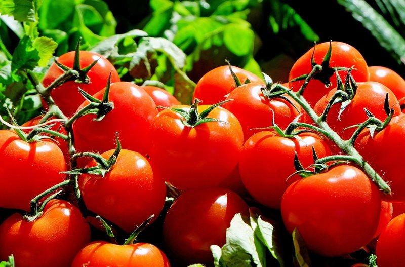 Chladnička alebo izbová teplota? Nová štúdia o skladovaní paradajok môže zmeniť naše doterajšie návyky