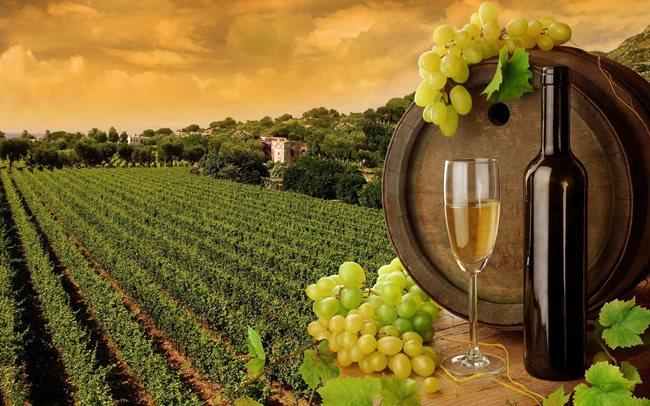 Prečo sa víno často predáva v tmavých fľašiach?