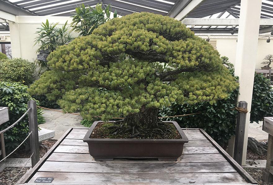 bonsaj-hirosima1