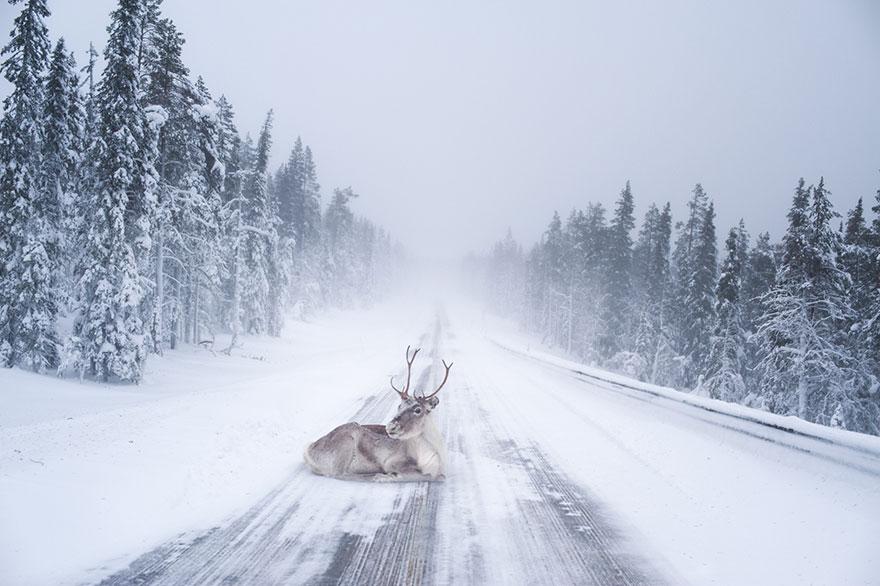 finsko-lapland1