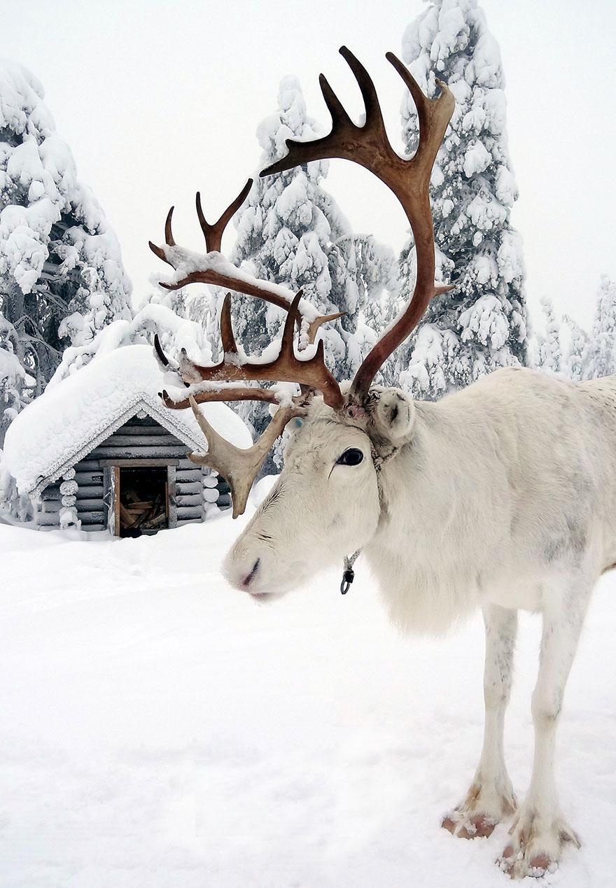 finsko-lapland4