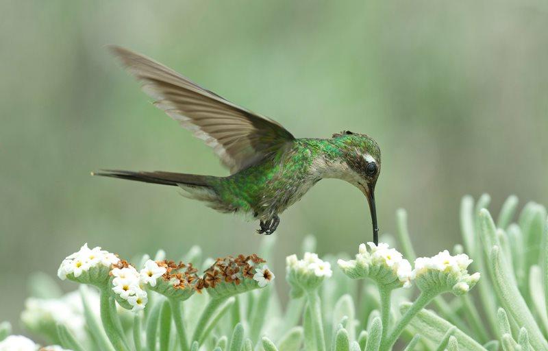 David J. Bird / British Ecological Society