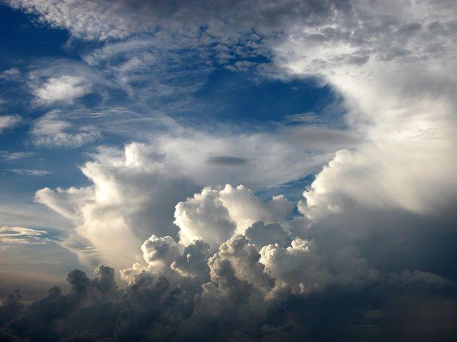 Čo produkuje najviac kyslíku na Zemi?